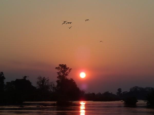 Fugle i solnedgangen over Mekong