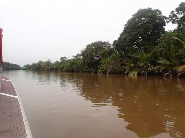 flodbredden ved regnskoven i Brunei