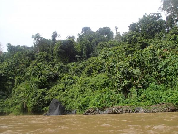 Regnskoven ved brunei set fra floden